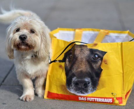 dog next to a carrier bag with a face of a dog printed on it