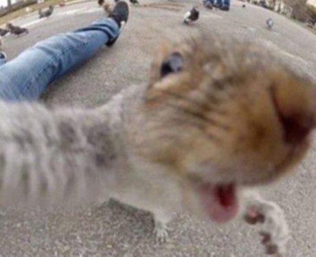 Squirrel animal selfie
