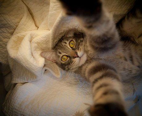 cat animal selfie