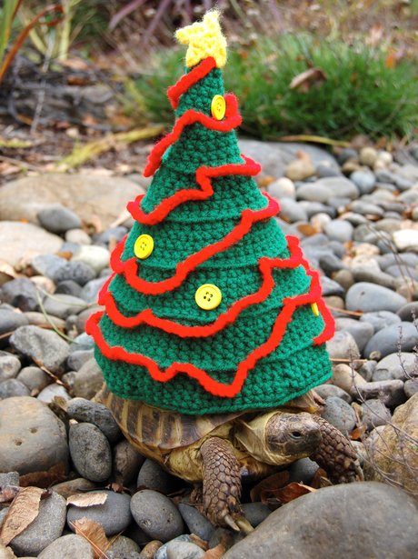 A tortoise in a christmas tree wolley suit