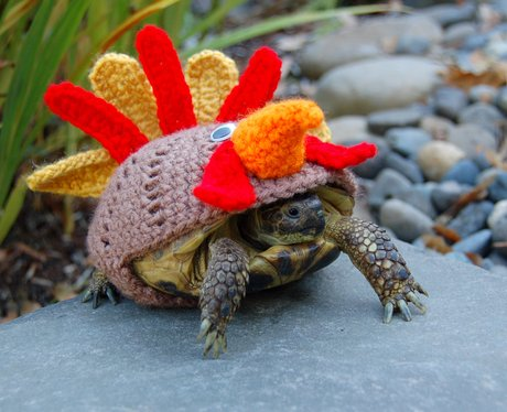 A tortoise in a chicken wolley suit
