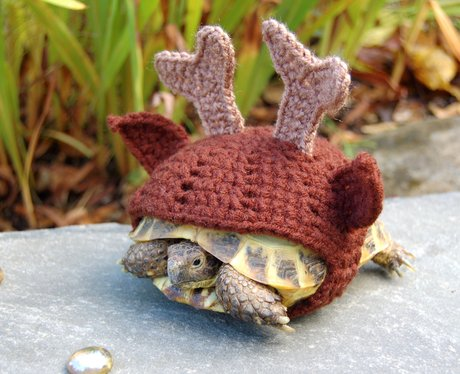 A tortoise in a reindeer wolley suit