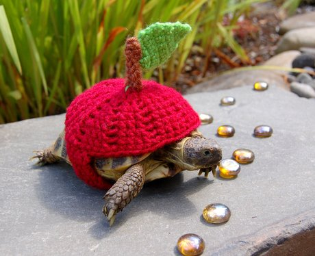 A tortoise in an apple wolley suit