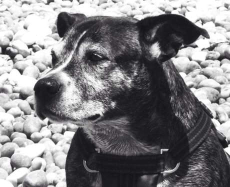 A black and white picture of a dog on a pebbly beach