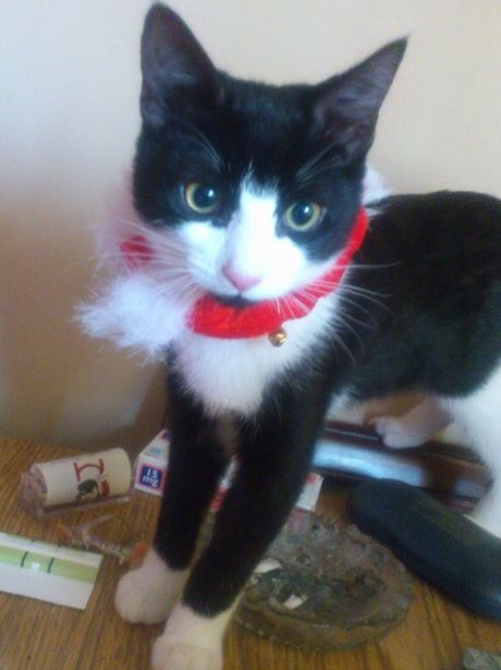 A black and white kitten with a red bow around it's neck