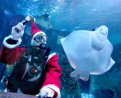 diver and manta ray