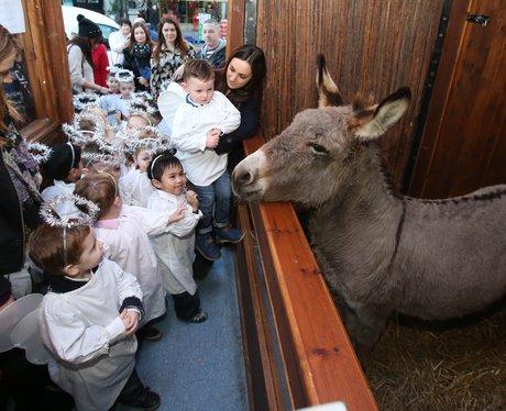 kids pet donkey
