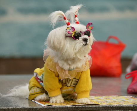 A fluffy white dog in sunglasses and a yellow onesie