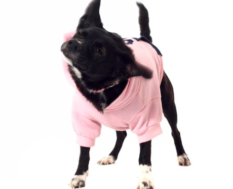 A black dog in a pink jacket