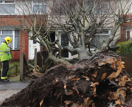 An upturned tree.