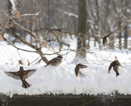 Birds flying in a snowy park