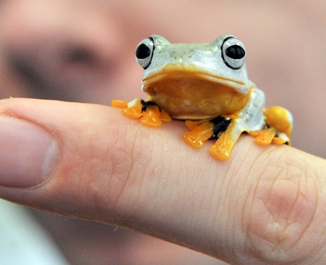 green frog perched on finger