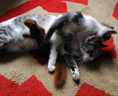 nursing cat squirrel and kitten