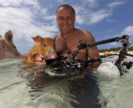 A man filming the pigs on pig beach