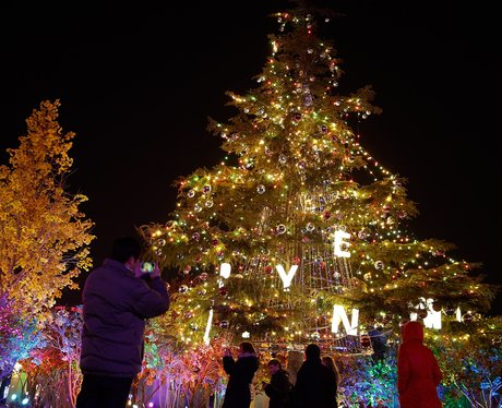 A lit up giant tree
