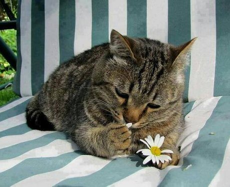 A cat playing with a flower
