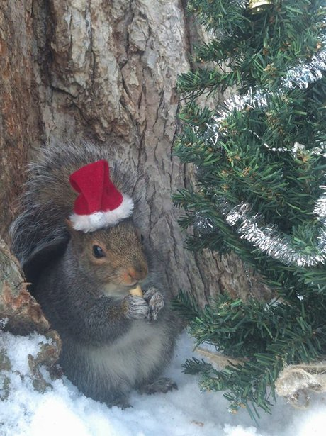 squirrel wearing santa hat