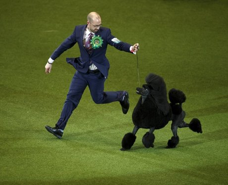 black poodle and owner