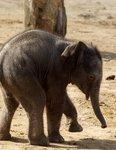 Twycross Zoo elephant