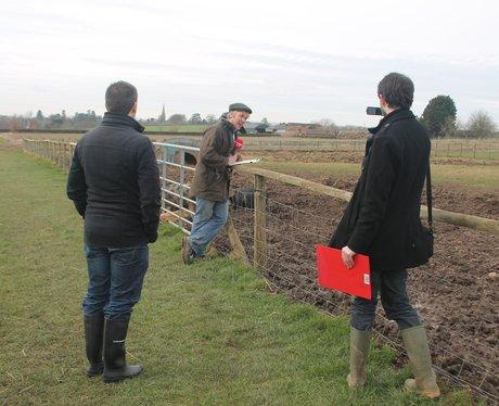 Over Farm Pig Racing