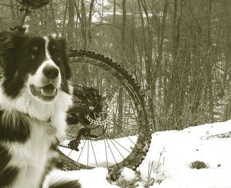 dog next to a bike