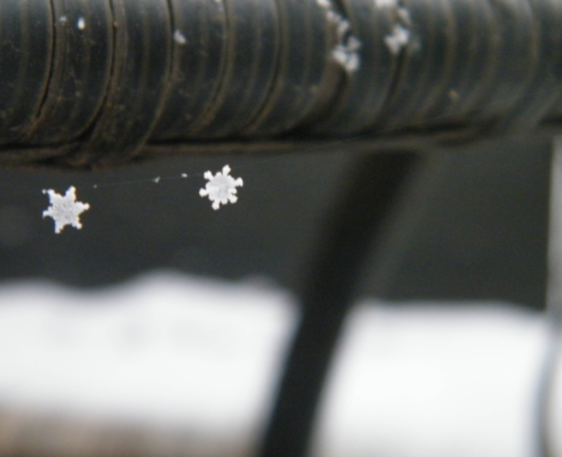 Two snowflakes caught in a spider's web