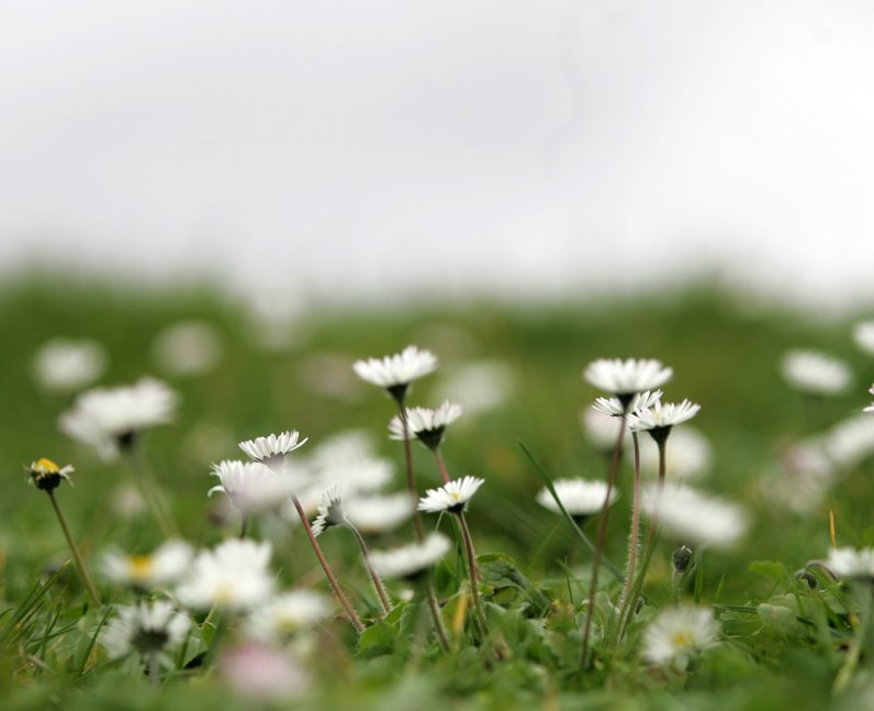 Spring Pictures From Across The UK