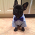 Image 2: A French Bulldog in in a dinner jacket