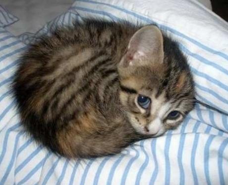 A kitten asleep on a bed
