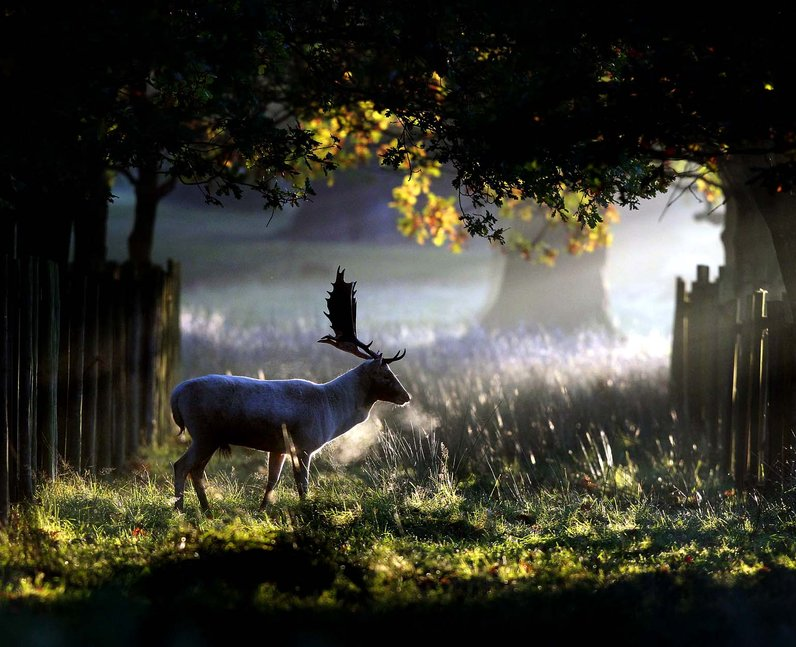stag in a forest