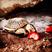 Image 1: A tortoise eating strawberries
