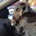 Image 10: A dog asleep in a car