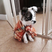 Image 9: A puppy in a cape