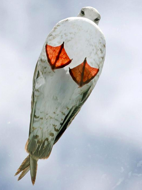 A seagull on a glass roof