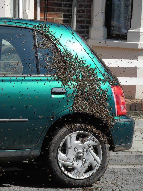 swarm of bees in Southsea