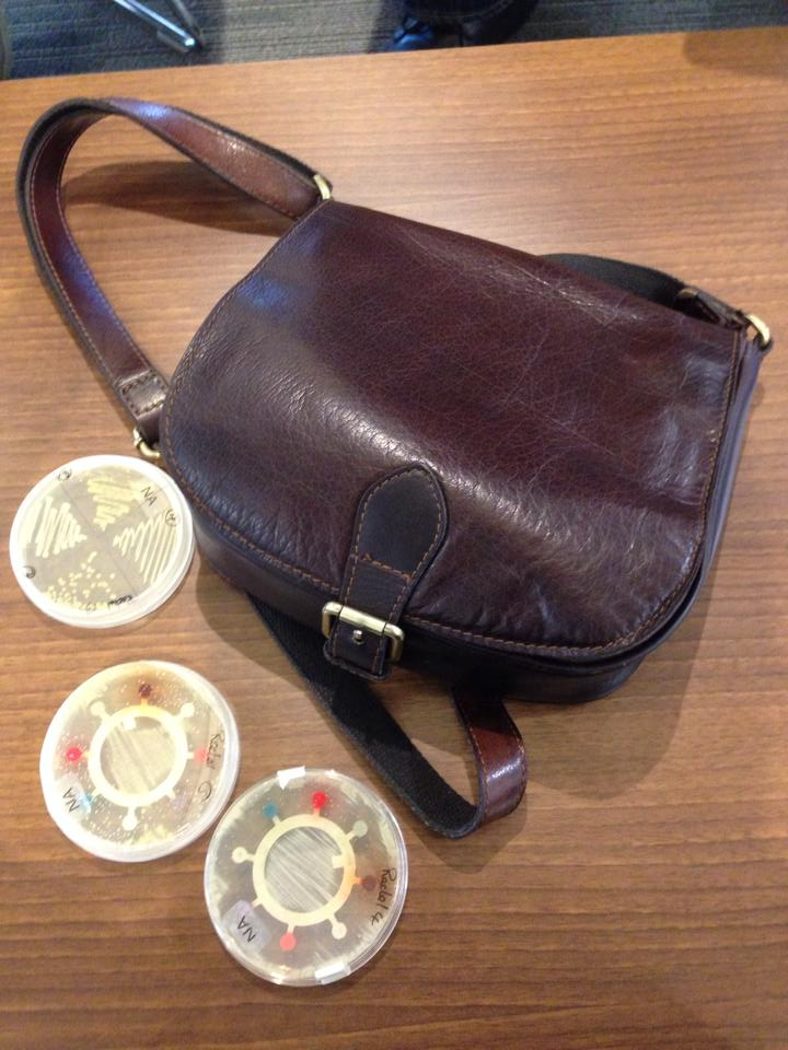 Rachel's handbag bacteria