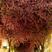 Image 6: cherry blossom