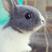 Image 7: A bunny rabbit