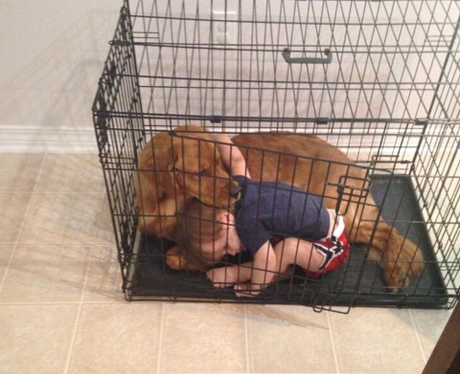 A boy and a dog cuddling in a cage