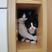 Image 6: Two cats sitting on a shelf