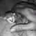 Image 8: A tiny kitten