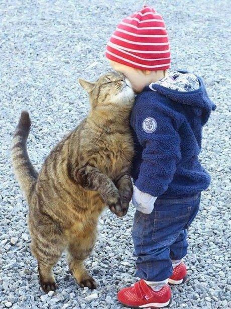 kitten and toddler
