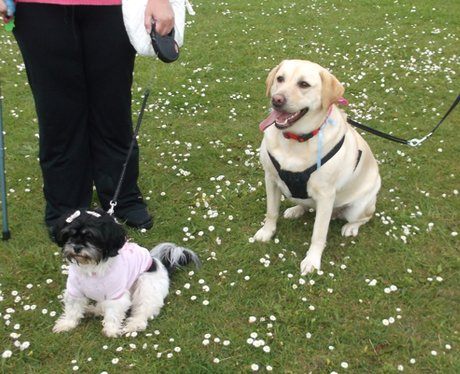 Swindon Race for Life Happy Dogs 2014