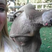Image 7: A photo bombing kangaroo