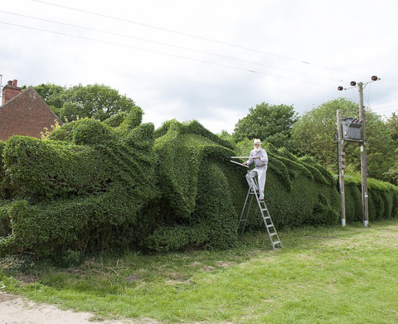 A man cutting his hedge into a dragon shape
