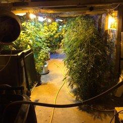 Soham Cannabis Factory