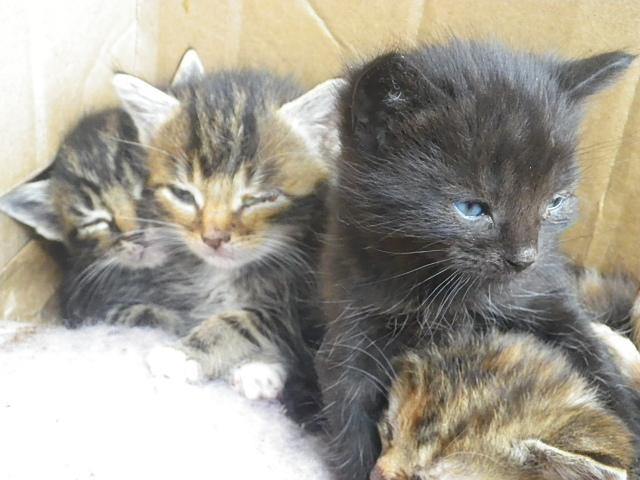 Wisbech Abandoned Kittens 2