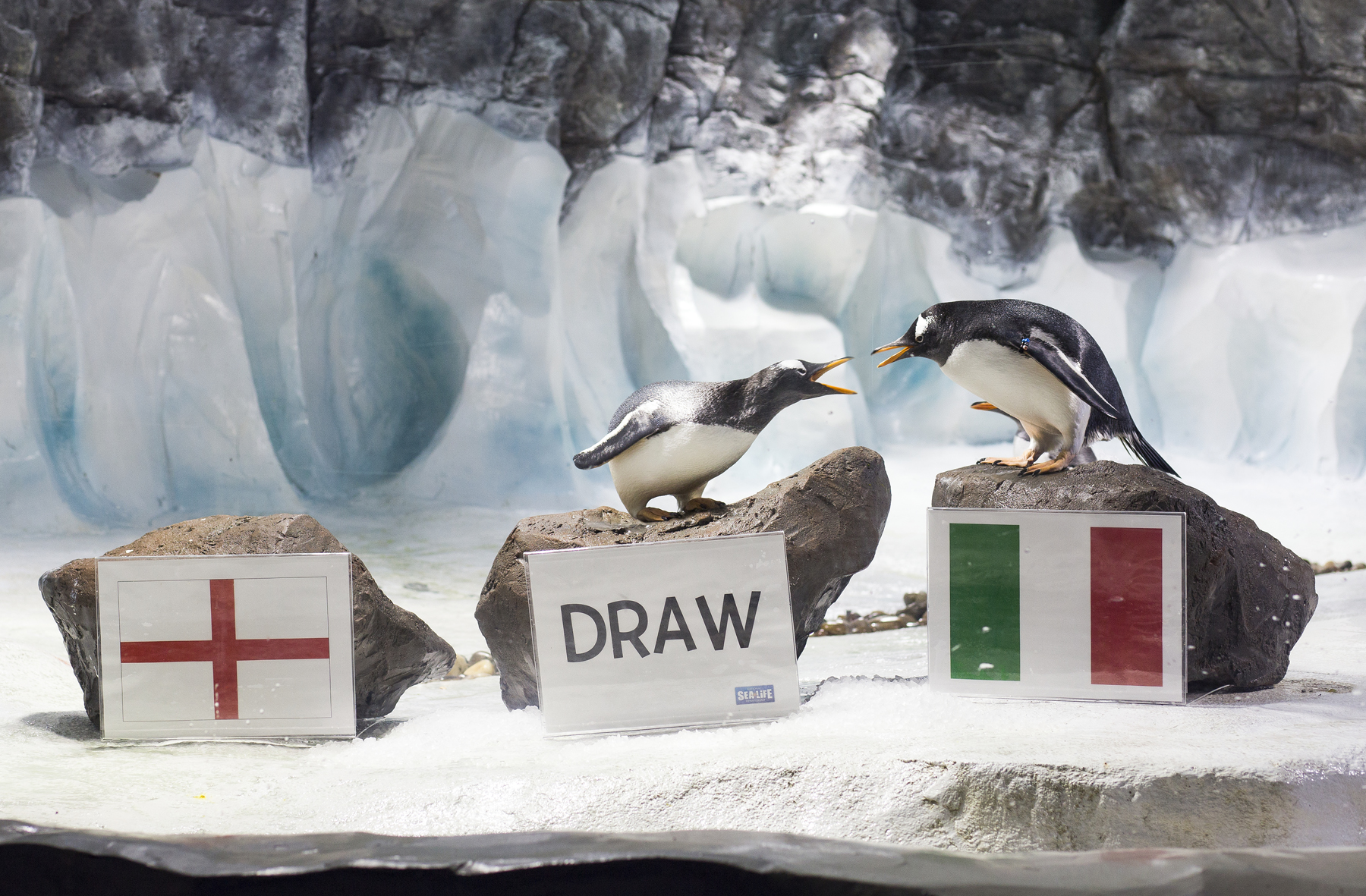 Penguin Predictions Birmingham