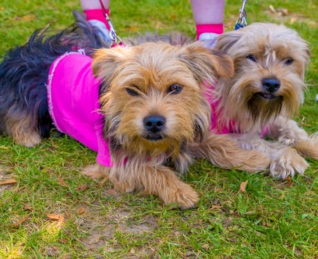Race for Life Bury St Edmunds Smiling Dogs 2014