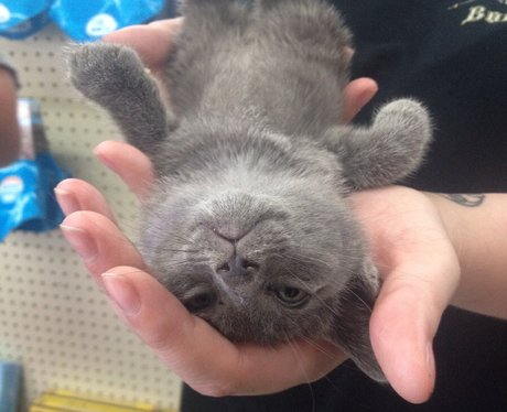 A cat lying in a person's hand